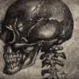 (Side View) Skull