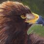 Aigle Royal by Kairisk