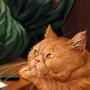 Ambassador (Threads of fate game art)