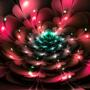 Bubblegum bloom