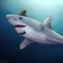 Friendly shark