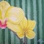 Orchids by Guique