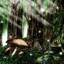Starlight Forest by ArticWolf811