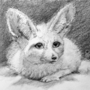 Graphite Study - Fennec Fox