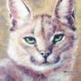 Bobcat Acrylic Painting Study