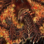 Wyrm of fire by archir
