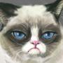 Grumpy Cat Tribute