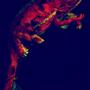 Chameleon by Mxthod