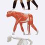 Gerard anatomy reference