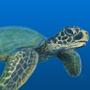 Sea Turtle by Mieshka
