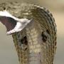 Great White Snake by ResidentEddy