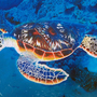 Turtle under the waves