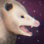 space possum coast to coast