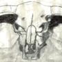Bull skull charcoal drawing
