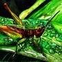 Pest by Rotis4