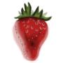Realistic Strawberry ~Procreate
