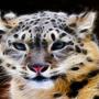 Fractal Leopard by BPAdmin