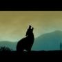 Wolf by maxxon