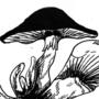 Mushroom Jam Session!