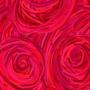 Rose Eyes