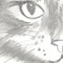 Furry cute cat