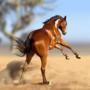 Paint horse study