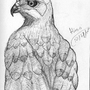 Streak The Hawk by Kinsei