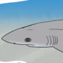 Shark Week 2020: Day 03 - Whitetip Weasel Shark