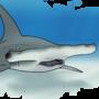 Shark Week 2020: Day 04 - Great Hammerhead