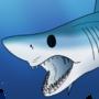 Shark Week 2020: Day 05 - Shortfin Mako