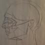 Classic Asaro Profile - Aged