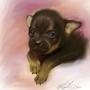 Blushing puppy