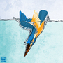 Kingfisher by J-qb