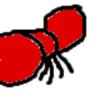 Penis Ant