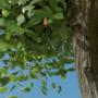 Blender Tree