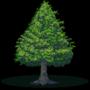 Tierzoo: Trees