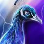 Peacock by JoshSummana