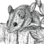 Inktober Day 6: Rodent