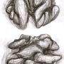 Walnut Core