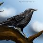 Crow by Maszrum