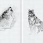 Wolf Sketches #2