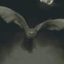 Barn Owl in Night Fog
