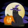 Cole I <3 Black Cats