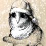 Christmas barn owl chick 03/11/2020