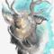 Reindeer 06/11/2020