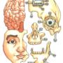 Face Schematics