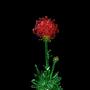 Crystal flowers. by icecoldmadkilla