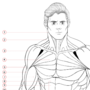Muscle Anatomy Diagram (Male)