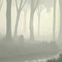 Misty morning. by icecoldmadkilla