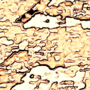 Gene Freeman Under the Microscope